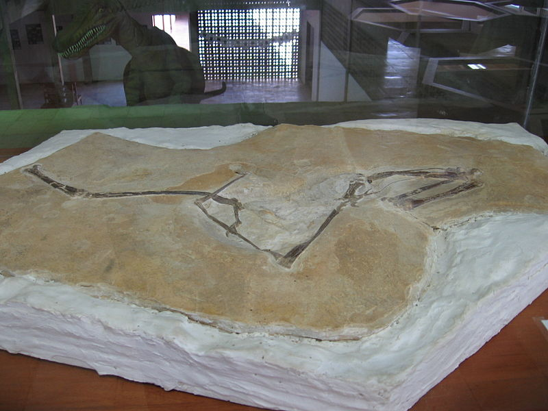 File:Fóssil de pterossauro, Museu de Paleontologia da URCA.jpg