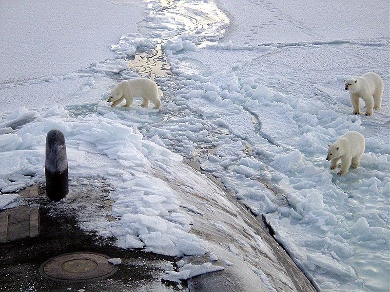 Osos polares sobre el hielo ártico