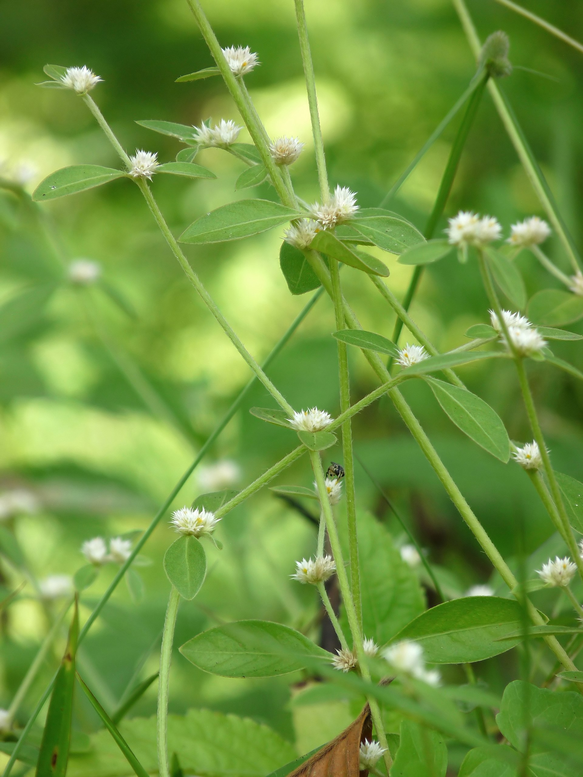 Medicinal Plants And Their Uses Pictures And Scientific Names