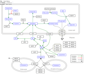 English: Statin Pathway from WikiPathways
