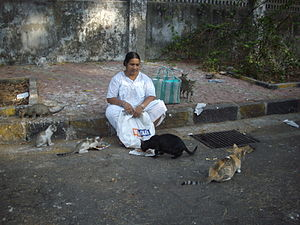 English: Feral street cats of Mumbai being fed...