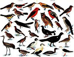Desenho de várias aves