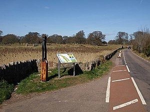 Road alongside marshland, Powderham - geograph...