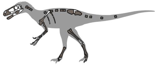 Eotyrannus remains 01.png