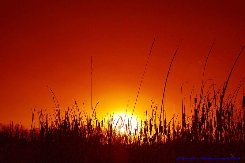 File:Flickr - law keven - Long Hot Summer.......jpg