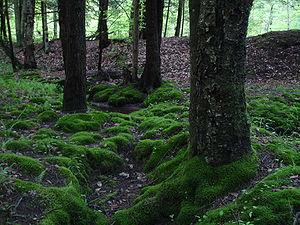 Tionesta, Allegheny National Forest.