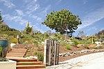 Arboretum, UCSC.jpg