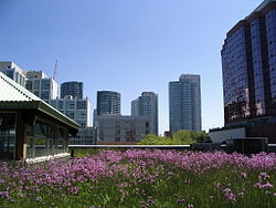 Green Roof in Toronto Canada