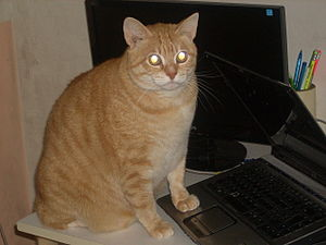 English: cat using a computer
