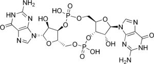 chemical structure of cyclic diguanylate (Cycl...