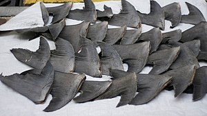 English: Fresh shark fins drying on sidewalk a...