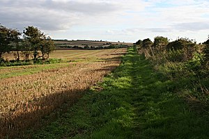 English: Bridleway in the Late Afternoon Sunlight.