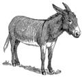 Donkey (PSF).png