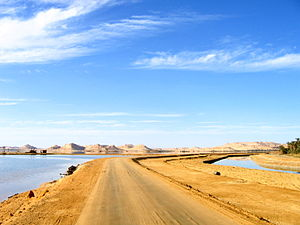 A road leading out of Siwa Oasis, Egypt.