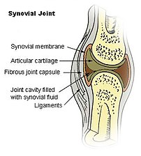 Diagram of a synovial (diarthrosis) joint.