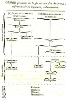 Evolutionary taxonomy  Wikipedia