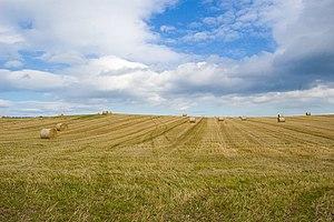 English: Harvest Time