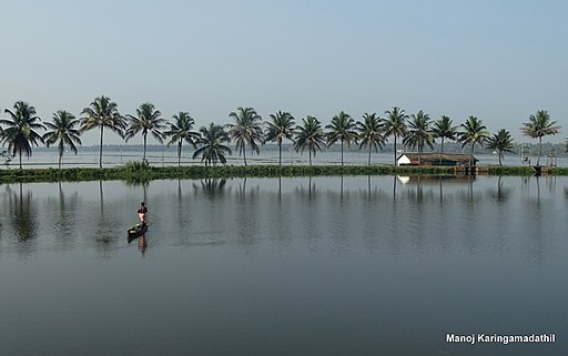 Thrissur Kole Wetlands May 2015 DSC04374