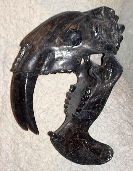 File:Thylacosmilus atrox skull.JPG