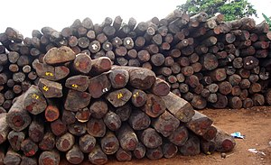 English: Illegal rosewood stockpiles in Antala...