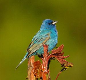Indigo Birds are Intuitive