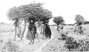 Florentine wood gatherers