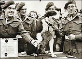 A dog receiving a medal while surrounded by a number of men in military uniform