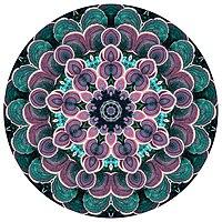 Mandala contemporáneo hecho de una fotografia de hongo de árbol