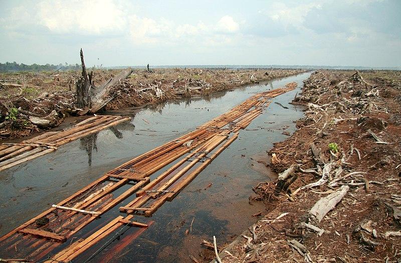 Indonesien wird laut Prognosen bis in 10 Jahren 98% seiner Regenwälder gerodet haben