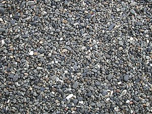 Small gray pebbles covering the ground.