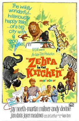 Zebra In The Kitchen Wikipedia