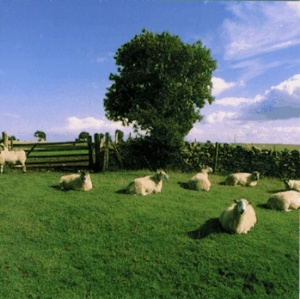 Chill Out from The KLF - at wikipedia