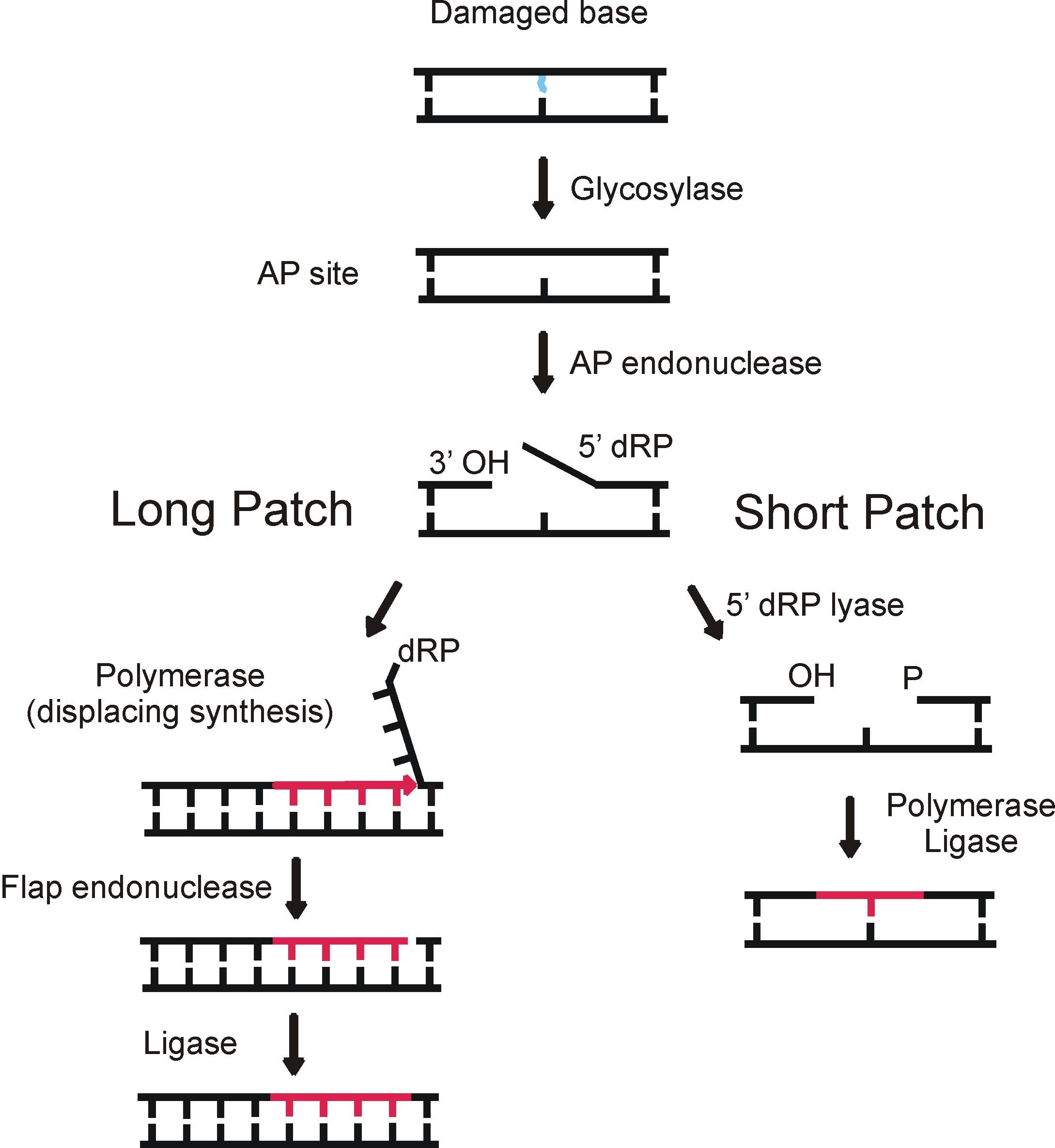 File Ber Basic Pathway
