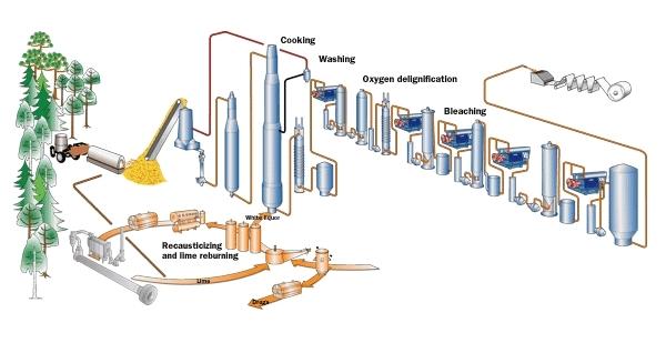 Kraft Process In Paper Manufacturing And Environment