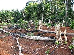 Deforestation in Cambodia1
