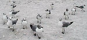 Sea gulls Solitude 2