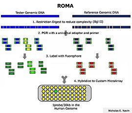Representation oligonucleotide microarray analysis  Wikipedia