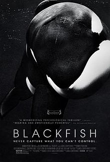 Black-and-white picture of an orca (killer whale) with the title Blackfish and credits underneath