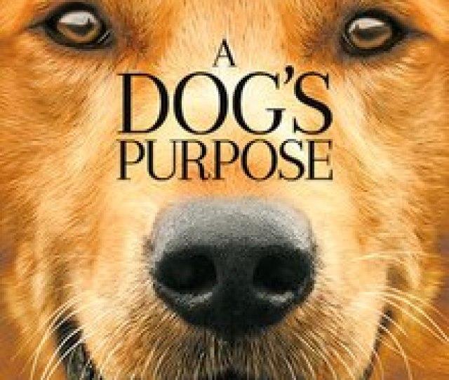 A Dogs Purpose Film Jpg