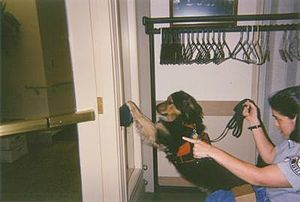 A service dog pressing a button to open an aut...