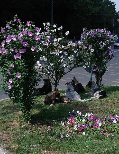 Fișier:Caini si flori, Bucuresti 2010.10.13.jpg