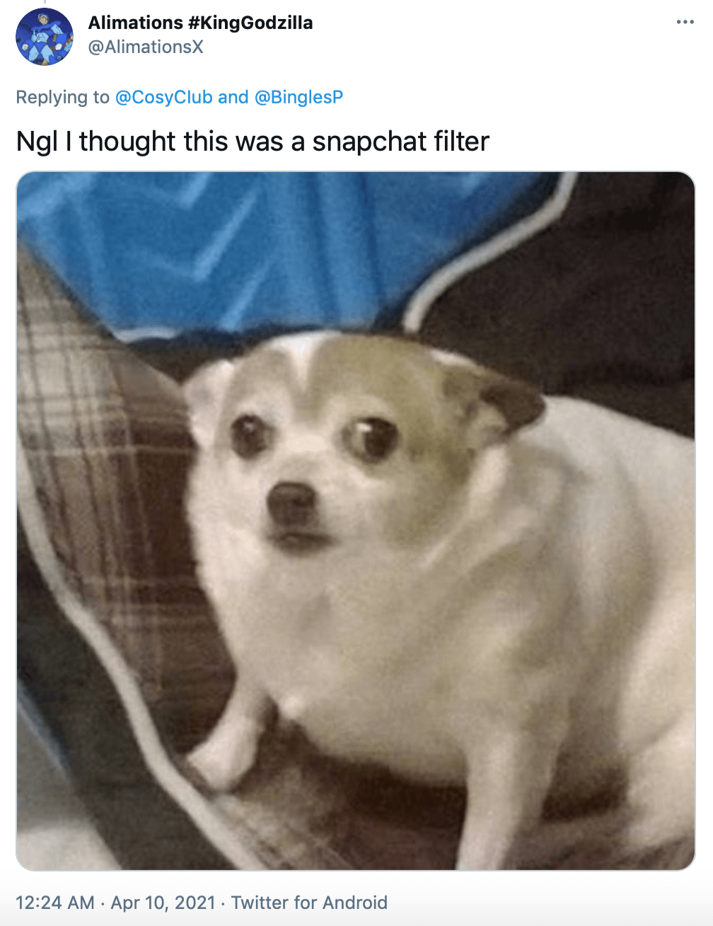 """Ngl I thought this was a snapchat filter"" picture of a small cringing dog"