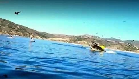 Baleia ataca americanas que estavam em caiaque