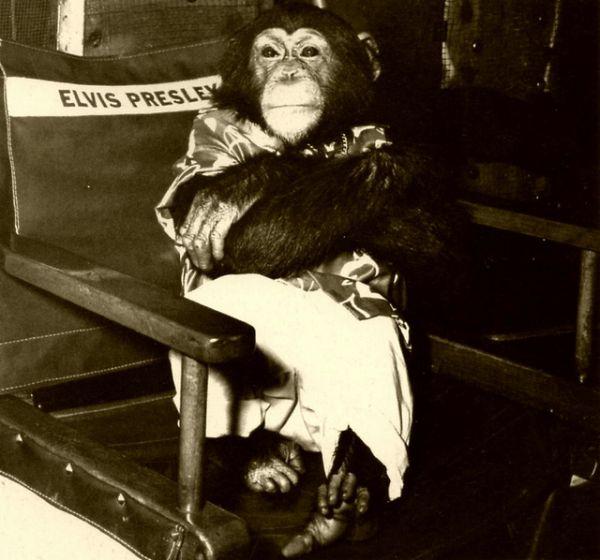 Image result for Elvis and Scatter