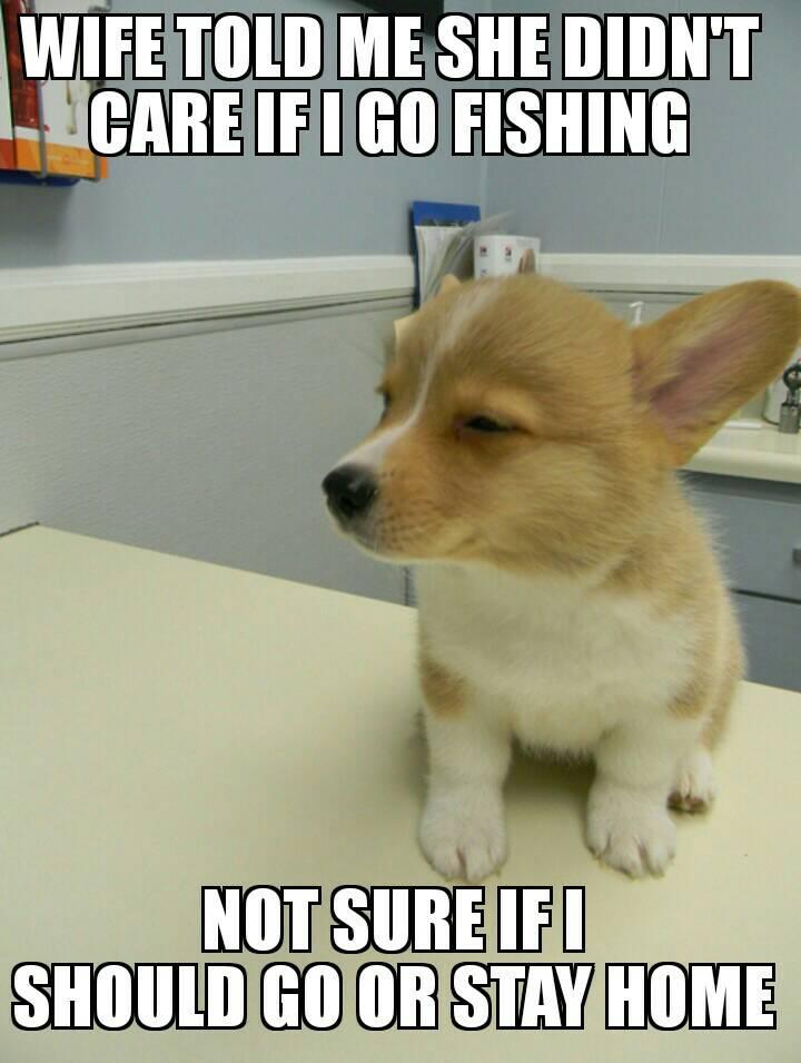 Funny Fishing Memes Tinboats Net