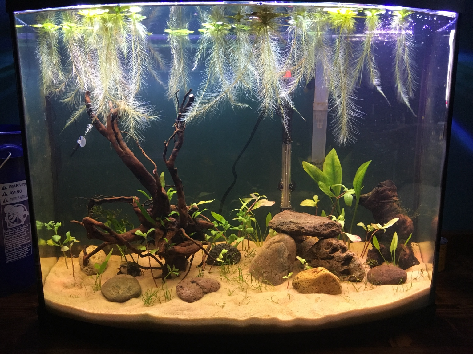 Dwarf Water Lettuce Vs Frogbit