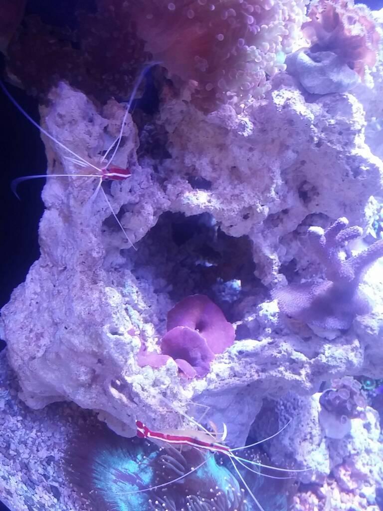 16 Gallon Aquarium Nuvo