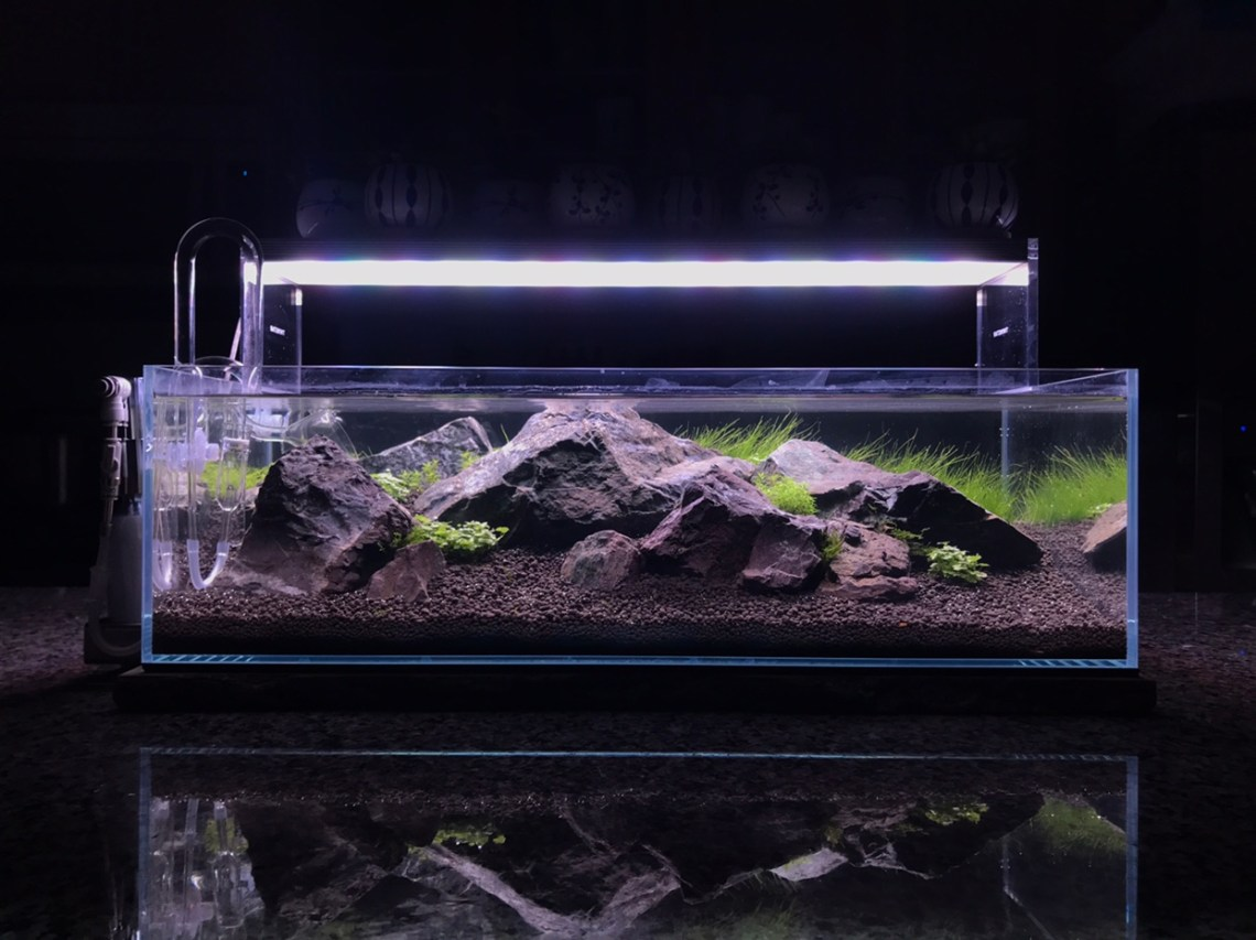 ADA 60F ᕕ( ᐛ )ᕗ L e t ' s g o ~ - The Planted Tank Forum