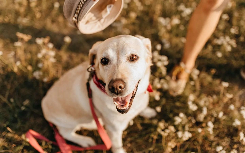 omega-3-oil-capsules for-dogs