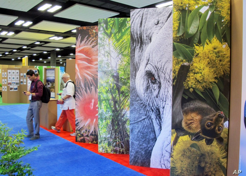 FILE - Conference attendees walk by a display of elephants and other wildlife at The International Union for Conservation of Nature World Conservation Congress on Friday, Sept. 9, 2016, in Honolulu.